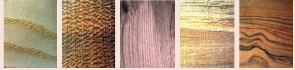 چوب انواع درخت